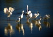 Spoonbill Get Out...