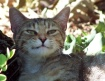 When kitties grin...