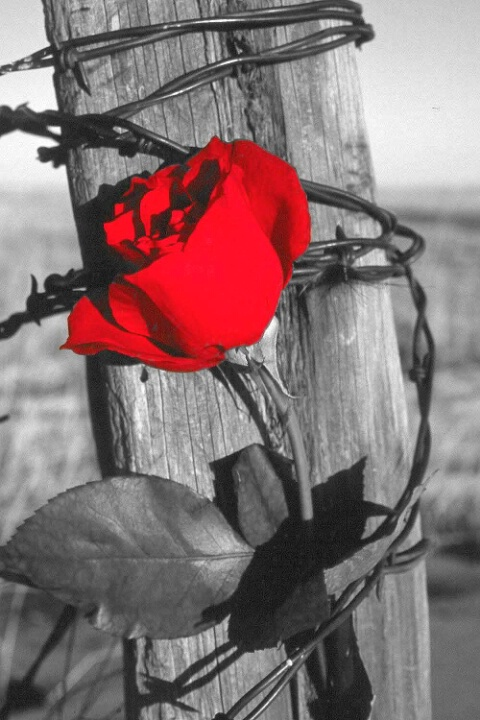 Beauty and Thorns