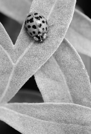 Lazy Ladybug