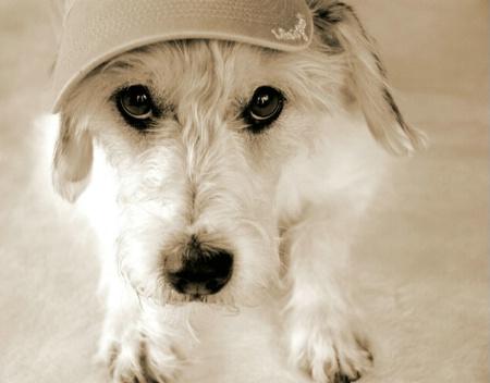 Doggie Sunscreen