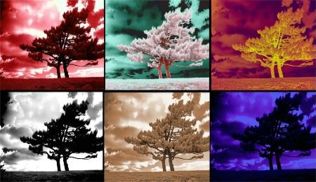 tree-line tango