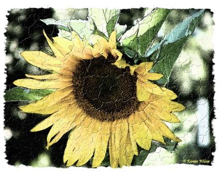 Sunflower in Fresco