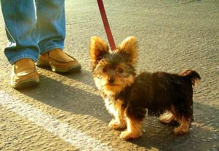 One Pound of Pup