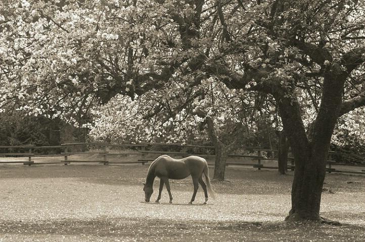 Grazing beneath the tree