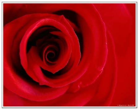 Hurricane Rose