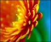 Gerbera Abstract