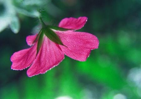 hanging pink