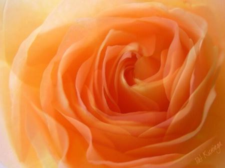Peach Organza