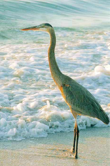 FL - Crane