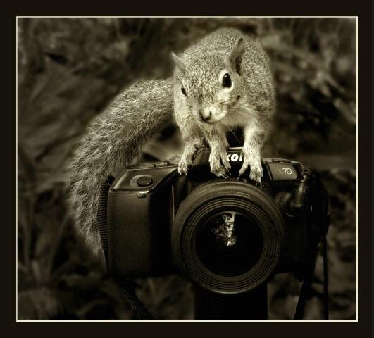 The Next BetterPhoto Member?