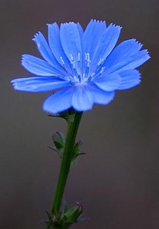 Field Flower
