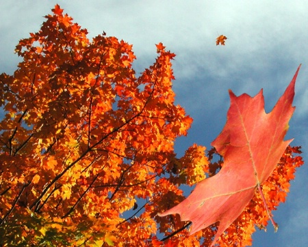 Falling Autumn