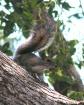 Brian's Squir...