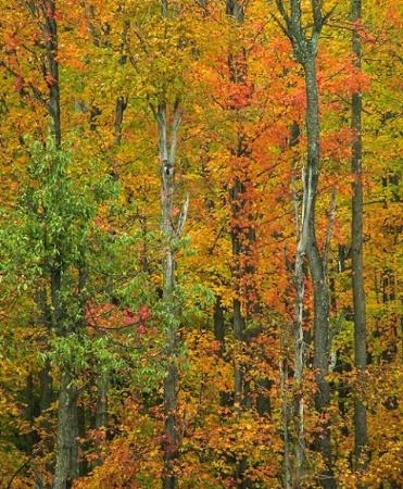 ...nature impressionism....