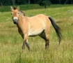 A Thinking Horse
