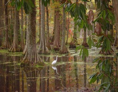 Cypress Garden at Swan Lake