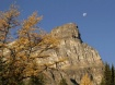 Moon over Larch