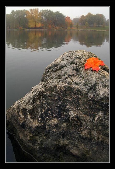 Foggy Canadian Fall
