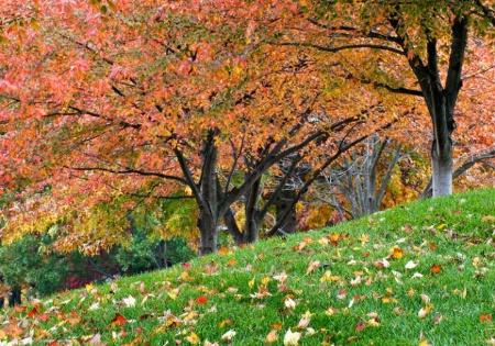 Trees on noon walk
