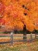Autumn Wisp
