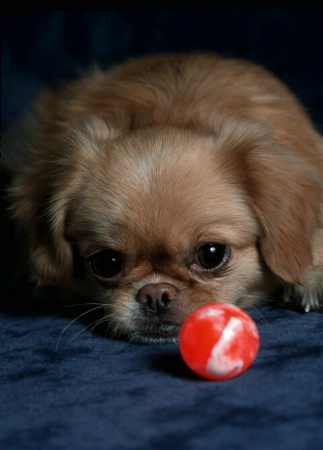 Stay Away From The Ball!!!