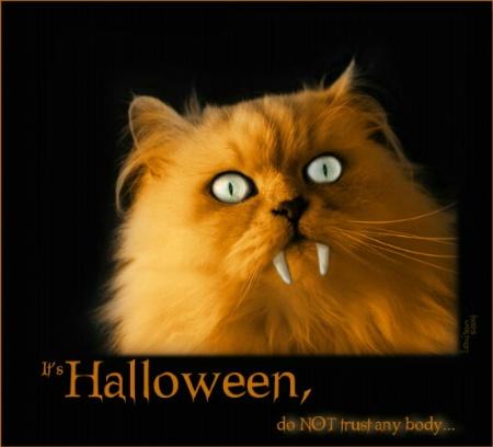Halloween metamorphosis