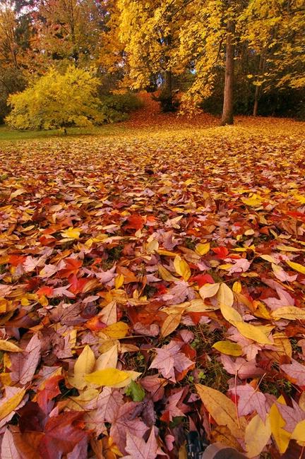 Season of Falling Leaves