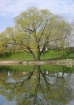 Tree Reflection A...