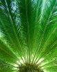 Beneath the Palms
