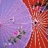 © Deborah Gillham PhotoID # 642501: Umbrellas