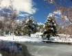 Frozen Reflection...