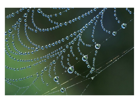Pearls of water