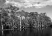 Lac des Allemands