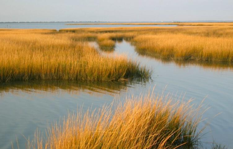 Marsh - ID: 697773 © Cynthia M. Wiles