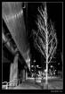 Urban Winter Tree