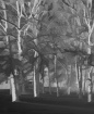 Grayscale Forrest
