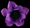 Beautiful Anemone...