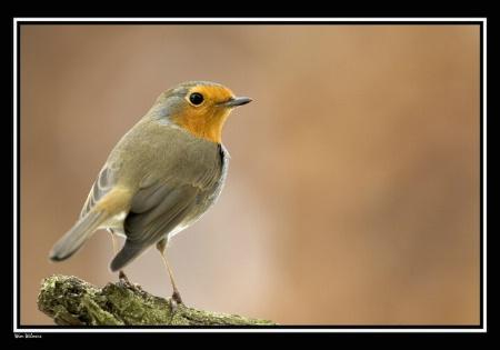 Robin my little friend