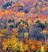 Fall Color, White...