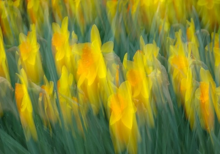 In the ocean of yellow and green