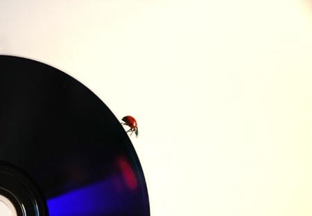 Ladybug in datafile