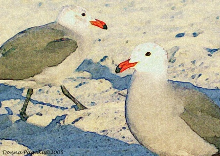 The Beautiful Seagulls
