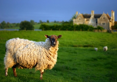 What are ewe looking at ?