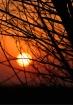 Sunset Brush