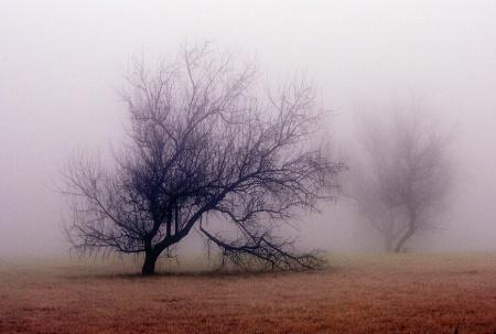 Foggy Morning Whispers