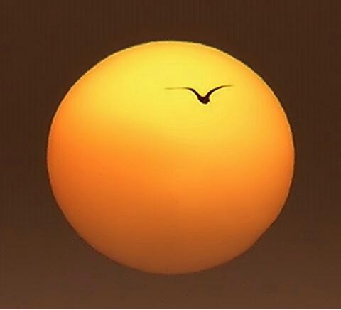 AVIATION TO SUN !!