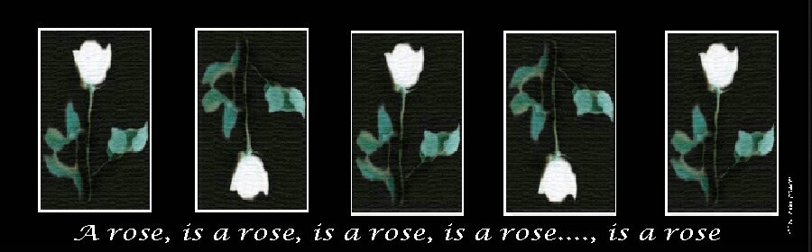 A rose, is a rose, is a...