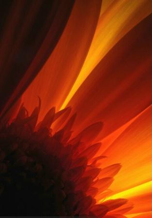Back Light Flower