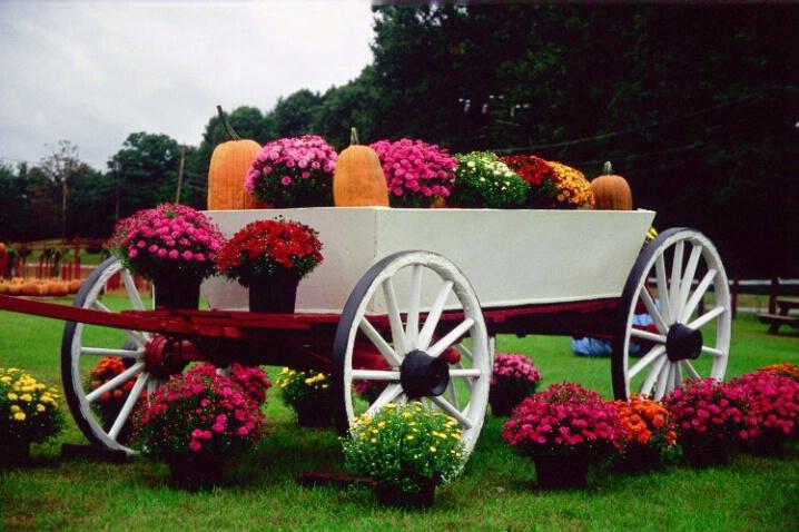 Autumn Wagon - ID: 803860 © Deborah A. Prior